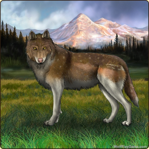 Wolf Game Play