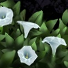 Border - Moon Flowers 2